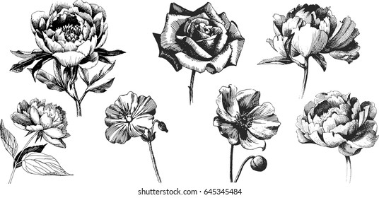 Flower drawing images stock photos vectors shutterstock wild flowers peony roses anemone isolated black ink drawing illustration mix flower thecheapjerseys Choice Image