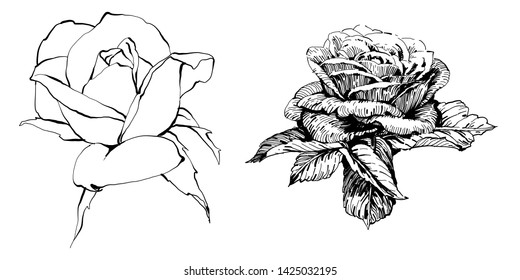 f877c5c1599b9 Wild flowers roses isolated. Black Ink drawing illustration.