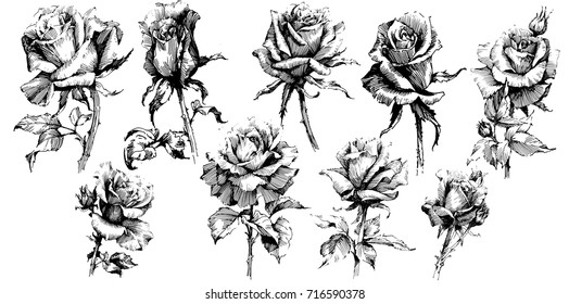 Wild flowers roses isolated. Black Ink drawing illustration. Mix flower vector for design.