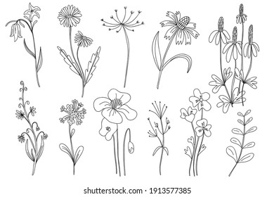 Wild flowers set. Hand drawn line black flowers, herbs and leaves, stem and petals. Herbal and meadow plant collection, decor floral elegant elements. Vector isolated botanical illustration
