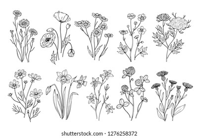 Wild flowers. Sketch wildflowers and herbs nature botanical elements. Hand drawn summer field flowering vector set