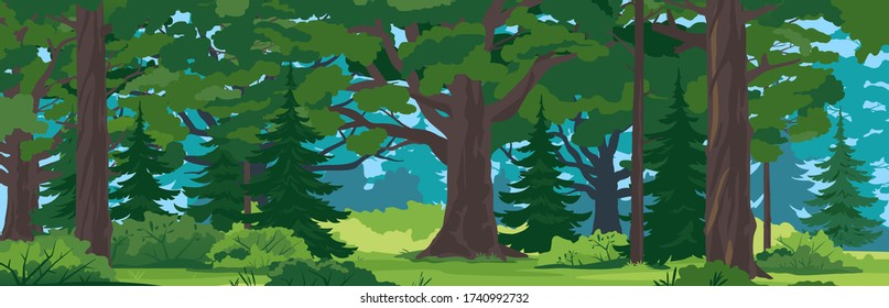 Wild forest with big oak trees, spruce trees and bushes in front view, tourist route through the dense spruce forest in summer sunny day nature landscape background, panorama of European forest