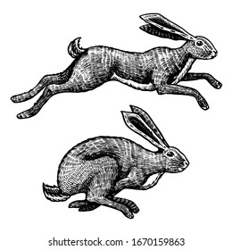 Wild hares. Rabbits are jumping. Forest bunny or coney. Hand drawn engraved old sketch for T-shirt, tattoo or label or poster. Vector illustration.