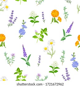 Wild healing herbs seamless pattern. Botanical floral background. Vector illustration of meadow flowers, medical plants in cartoon flat style.