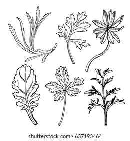 Wild herbs collection/ Hand drawn field plants in sketchy style/ Vector illustration in black and white