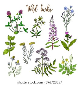 Wild herbs color set isolated on white background. Vector illustration