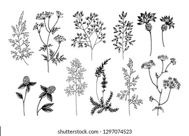 Wild and herbs plants set. Outline, Silhouette and sketch botanical hand drawn illustration. Spring flowers. Vector design. Can use for greeting cards, wedding invitations, patterns.
