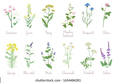 Wild herbs set with names isolated. Wildflowers, herbs, leafs. Garden and wild foliage, flowers, branches vector illustration