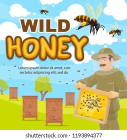 wild honey beekeeping poster of beekeeper at apiary with honeycomb. Vector cartoon design of man in protective outfit taking honey from beehives with bees swarm around