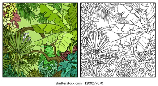 Wild jungle with big banana palm leaves color and black contour line drawing for coloring on a white background