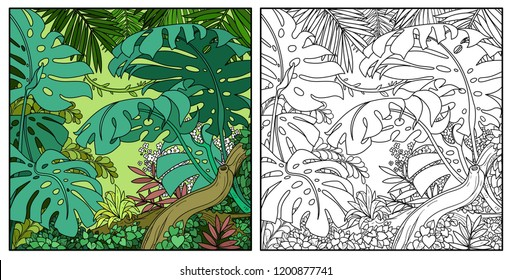 Wild jungle with big palm leaves and branch color and black contour line drawing for coloring on a white background