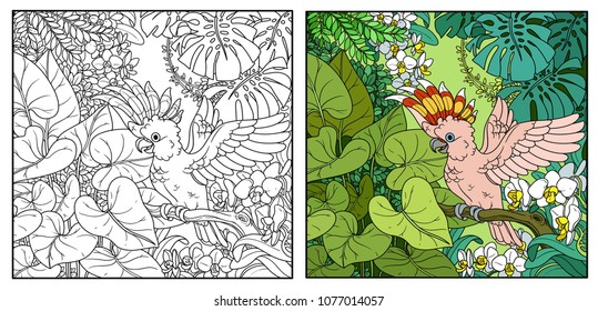 Wild jungle with Major Mitchell's Cockatoo opens wings color and black contour line drawing for coloring on a white background