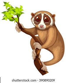 Wild loris on the branch illustration