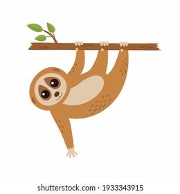 Wild loris on the branch. Vector illustration