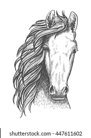 Wild mustang isolated sketch symbol for wildlife theme or t-shirt print design usage with close up portrait of a head of american free-roaming or feral horse