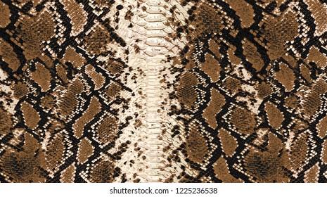 Wild patter snake