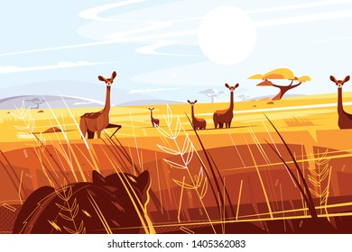 Wild picturesque savannah vector illustration. Nice giraffes walking and tiger hiding in grass and hunting on them flat style concept. Beautiful natural scene