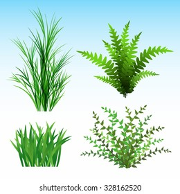 Wild Plants vector illustration. Saved in EPS 10 file with transparencies, all elements  are separated.