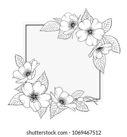 Wild rose rosa canina blooming herbal flowers. Decorated rectangular square border frame template. Cherry sacura like blossom. Black white outline sketch drawing.