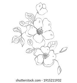 wild roses on white background. Hand-drawn illustration.background, texture, wrapper pattern, frame or border.