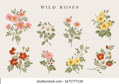 Wild roses. Yellow, red, pink, white roses. Botanical floral vector illustration.