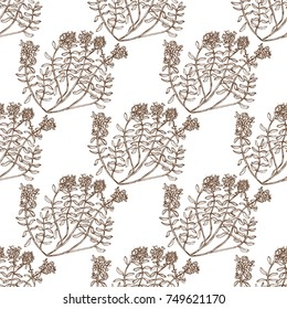 Wild Thyme Seamless Pattern. Hand Drawn Graphic Background for Surface Design. Vector Illustration of Medicinal Plant