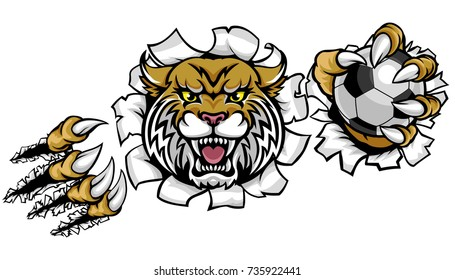 A wildcat angry animal sports mascot holding a soccer football ball and breaking through the background with its claws