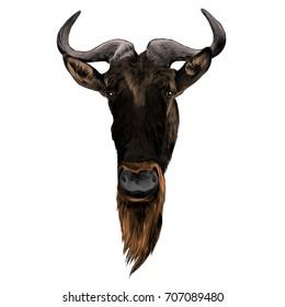 wildebeest head sketch vector graphics color picture