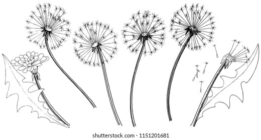 Wildflower dandelion in a vector style isolated. Full name of the plant: dandelion. Vector flower for background, texture, wrapper pattern, frame or border.