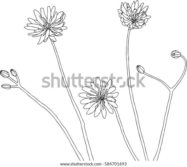 Image Vectorielle De Stock De Illustration De Dessin à La