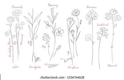 Wildflowers one line drawings set. Camomile, hop silhouette clipart. Twigs and flowers with names minimalistic illustrations pack. Plants vector sketch. Botanical isolated design elements
