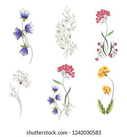 Wildflowers. A set of graphic elements for botanical compositions. Vector illustration on isolated white background