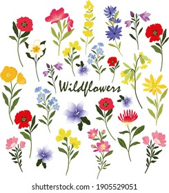Wildflowers vector graphic clipart, 16 individual elements including poppies, forget-me-not and buttercup