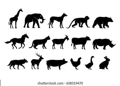 wildlife animal silhouette