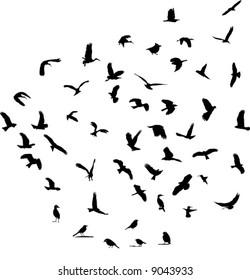 Wildlife bird silhouettes set