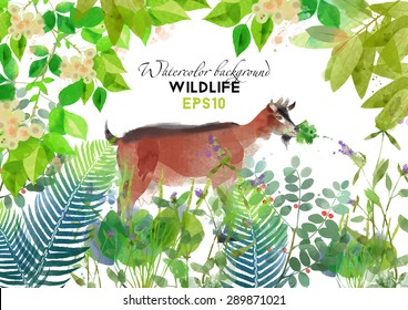 Wildlife. Watercolor vector background with goat