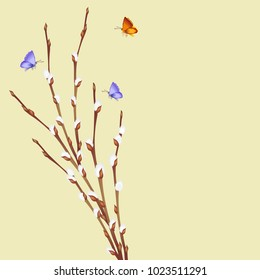 Willow branch with buds (catkins) and flying butterflies. Hand drawn vector illustration of pussy willow twigs for spring design.