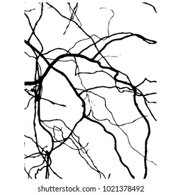 Willow branch of salix, Silhouette. Black White. Vector illustration. Curly willow.