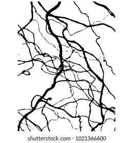 Willow branch. Silhouette. Black White. Vector illustration