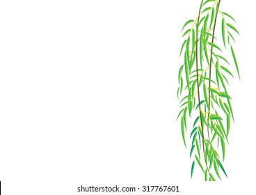 Willow branches on white background,Vector illustration