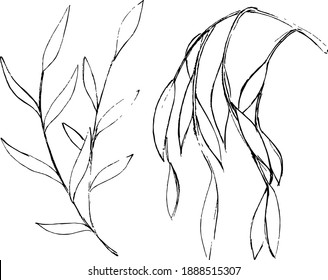 Willow ink sketches. Simple freehand leaves and branches drawings. Minimal nature artworks set. Vector monochrome elements.