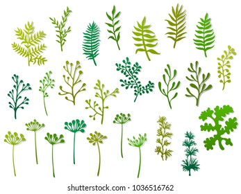 Willow and palm tree branches, fern twigs, lichen moss, mistletoe and other grasss herbs, dandelion flower vector illustrations set. Hand drawn branches, green twigs flora collection isolated on white
