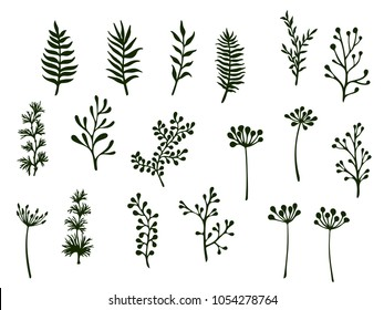 Willow and palm tree branches, fern twigs, lichen moss, mistletoe, summer grass herbs, dandelion flower vector illustrations set. Simple branches, twigs floral collection isolated on white.
