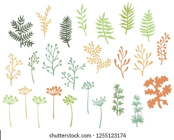 Willow and palm tree branches, fern twigs, lichen moss, mistletoe, savory grass herbs, dandelion flower vector illustrations set. Lovely green brown branches, twigs floral collection isolated on white
