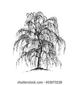 Willow sketch illustration