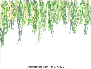 willow tree branch for frame background. green leave weeping tree