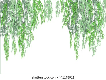 willow tree branch for frame background. weeping tree on white background