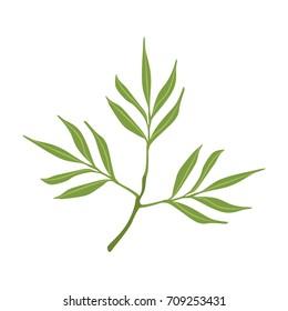 Willow tree green branch vector Illustration