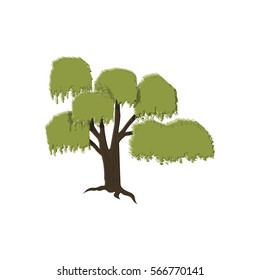 willow tree isolated on white, vector illustration in flat style