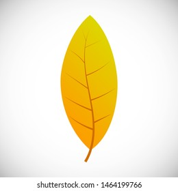 Willow yellow leaf. Autumn leaf of a tree on a white background. Vector illustration